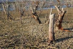 Globalnego nagrzania pojęcie, nieżywy drzewo Obraz Royalty Free