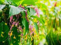 Globbaen Ginger Flowers Royaltyfri Foto