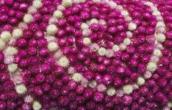 Globe amaranth Royalty Free Stock Images