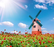 Globe amaranth flower and windmill and blue sky background Stock Photos