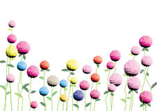 Globe amaranth flowers   watercolor  brush hand drawn for background,or card Royalty Free Stock Photo