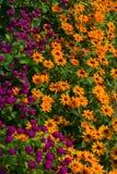 Globe Amaranths & Yellow Daisies Royalty Free Stock Images