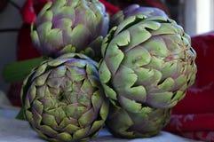Globe artichoke Cynara cardunculus Royalty Free Stock Images