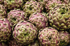 Globe artichoke, Cynara cardunculus Stock Images