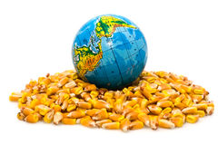 Globe and corn Royalty Free Stock Photography