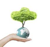 Globe de la terre dans des ses mains Image libre de droits