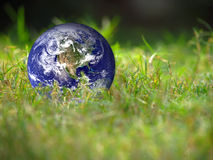 Globe de la terre se trouvant sur l'herbe verte fraîche conceptuelle Image libre de droits
