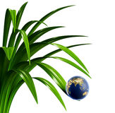Globe de la terre sur une lame d'herbe Photos stock