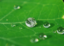 Globe drop. Earth as drop of water on leaf Stock Photography
