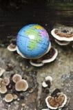 Globe of earth Stock Photo