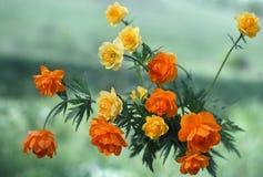 Globe-fleur Photographie stock libre de droits