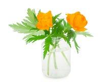 Globe-flowers in glass jar Stock Photos