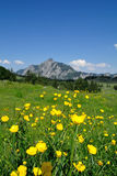 Globe-Flowers & Rinnkogel Stock Photography