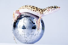 Globe in gecko Stock Images