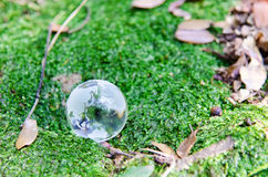 Globe of glass. (Background of green moss Stock Image