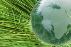 Globe in grass Royalty Free Stock Photos
