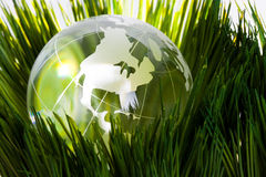 Globe and green grass Stock Photo