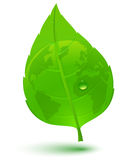 Globe on green leaf Stock Photography