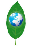 Globe on the leaf (vector) Stock Photos