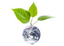 Globe with leaves Stock Photo