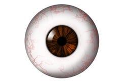 Globe oculaire humain avec l'iris brun photo stock