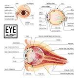 Globe oculaire infographic, style de bande dessinée illustration stock