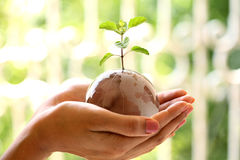Globe and plant in the hands Royalty Free Stock Photography