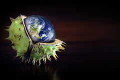 Globe protected in the shell of a chestnut, symbol of environmental protection stock image
