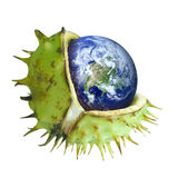 Globe protected in the shell of a chestnut, symbol of environmental protection royalty free stock images