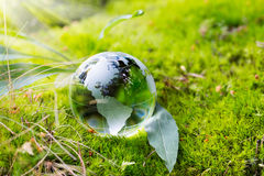 Globe resting on moss in a forest. Royalty Free Stock Photography