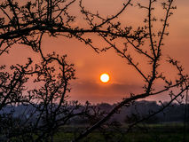 Globe Sunset Framed with Tree Branches in Spring Royalty Free Stock Images