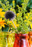 Globe thistle and other summer flowers in colorful glass vases Royalty Free Stock Image