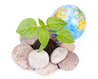 The globe and transplant of tree Stock Photography