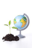The globe and transplant of tree Royalty Free Stock Photography
