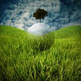 Globe of tree fly over field, Sustainable concept Royalty Free Stock Photo