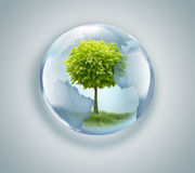 Globe with tree inside Royalty Free Stock Photo