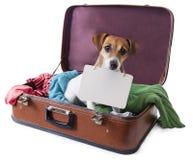 Globe-trotter de chien Images libres de droits
