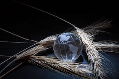 Globe and wheat stock photography