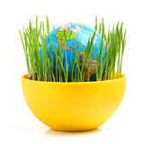 Globe in wheat germ. Royalty Free Stock Photography
