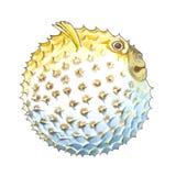 Globefish Royalty Free Stock Image