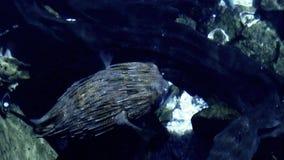 Globefish stock video