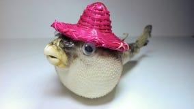 Globefishspecimen Royalty-vrije Stock Foto's