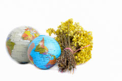 Globes with yellow flowers. Globes and a  bunch of yellow wild flowers on white background Royalty Free Stock Image