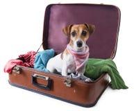 Globetrotter hond Royalty-vrije Stock Foto's