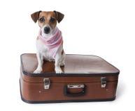 Globetrotterhund Stockfotos