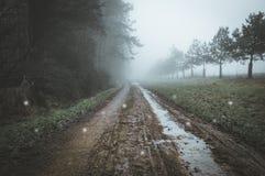 Globi spettrali che galleggiano su una pista fangosa del terreno boscoso un giorno di inverni nebbioso Con un lunatico desaturato immagine stock