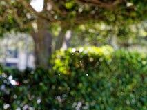 Globo coperto di spine Weaver Spider nel web Immagine Stock Libera da Diritti