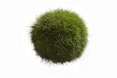 Globo de la hierba Fotos de archivo libres de regalías