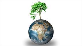Globo del mondo con la pianta illustrazione di stock
