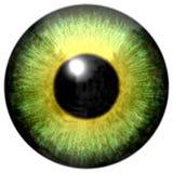 Globo del ojo despredador animal hermoso del cocodrilo del verde amarillo